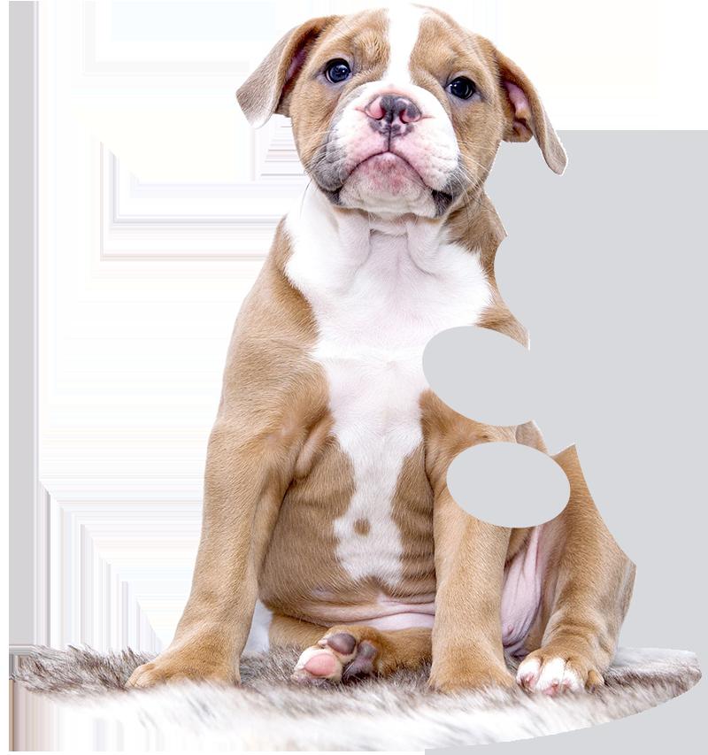 puppy on rug